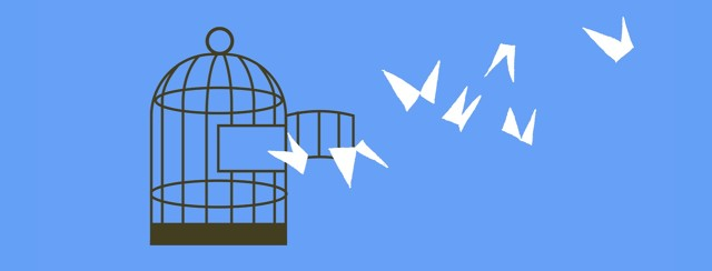 Birds fly away from an open cage